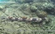 """Phát hiện cá mập """"biết đi"""" ở Indonesia"""